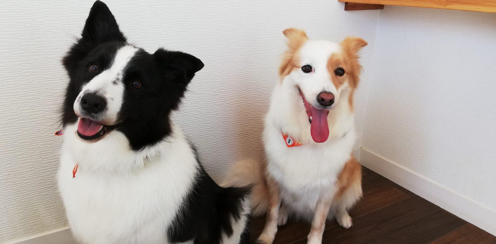 リキちゃん&花ちゃん