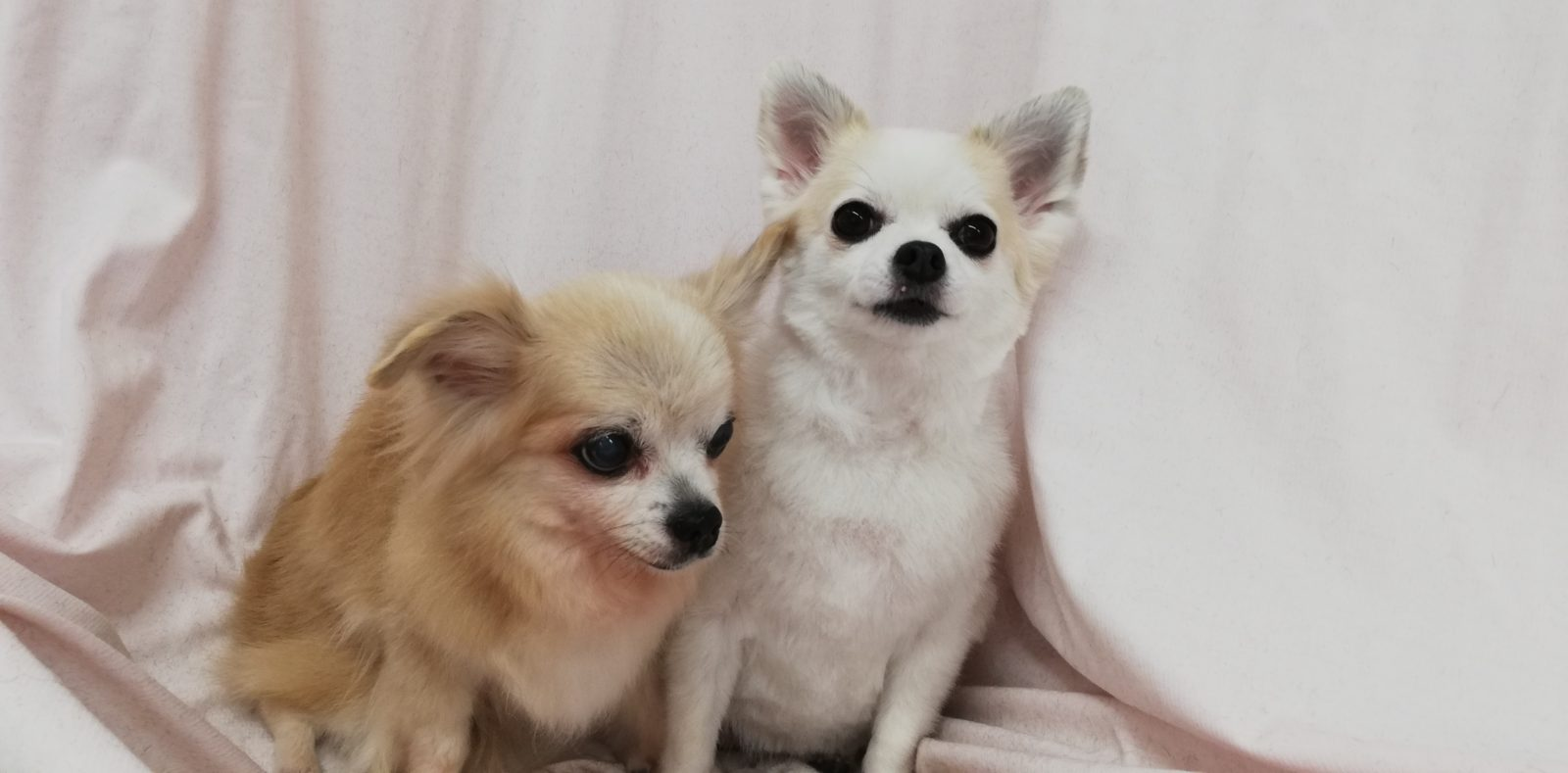 りんちゃん&すずちゃん
